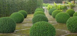 Les jardins de valentine-Tonte et entretien